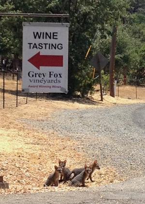 Grey Fox Vineyard Greeters!